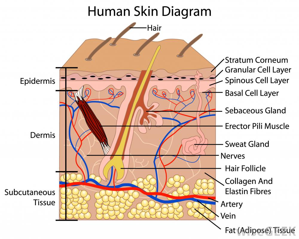sweaty hands and feet full treatment overview leaf epidermis diagram leaf epidermis diagram
